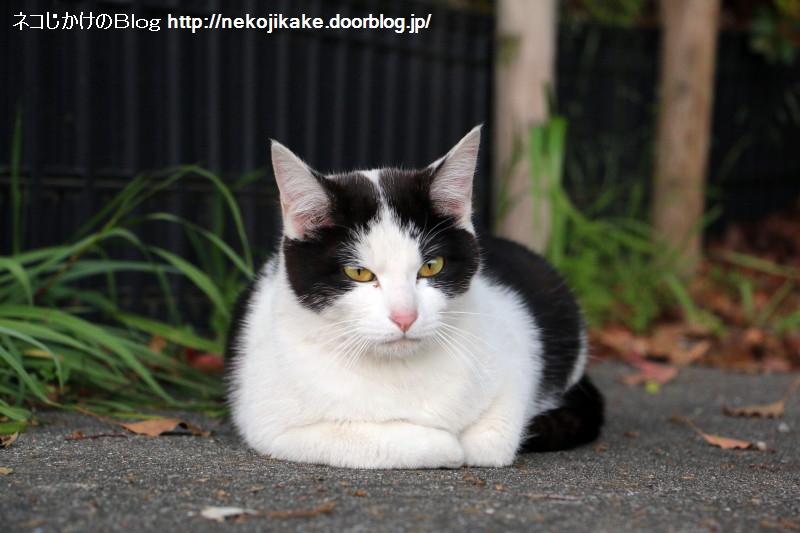 2015042306猫を見て思うこと。3