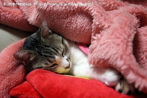毛布に食われた。