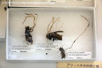 2018102111きのこ!キノコ!木の子!@大阪市立自然史博物館。7