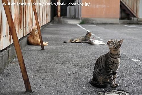 たむろする猫たち。