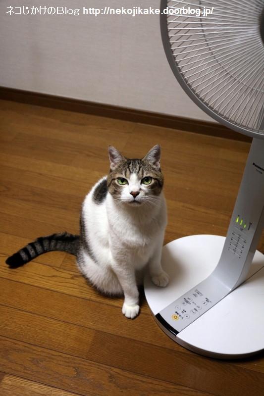 2018071101扇風機と共に生きる。