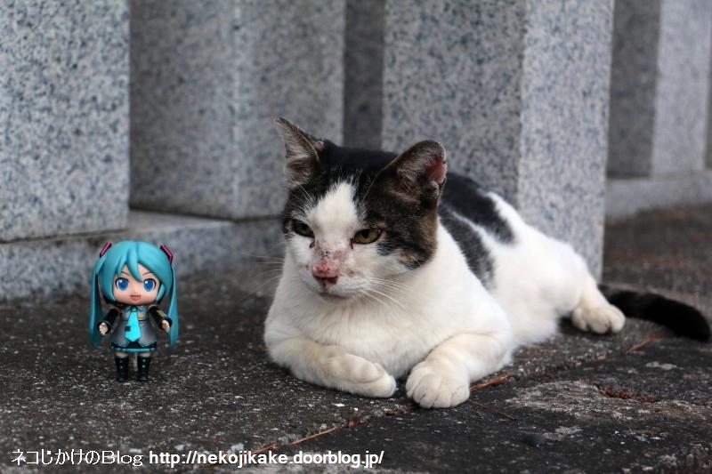 2018080320猫がいるんダヨー。