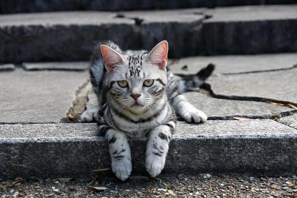 クークーだってネコである・・・。その2 クークー