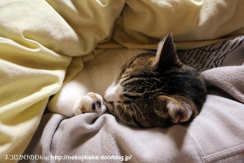 2015060701腕枕でおやすみ。