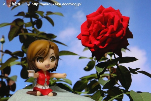 2016102016真っ赤なバラを君に。3
