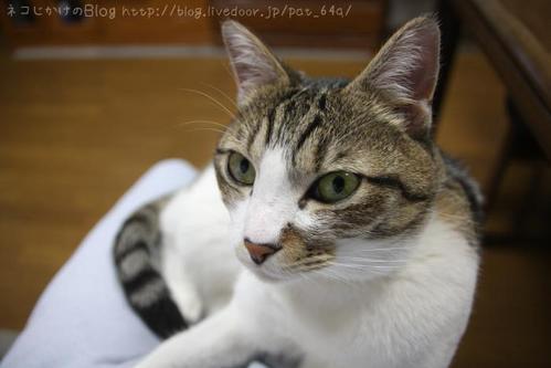 ネコは何にも言わないけれど。 シマ