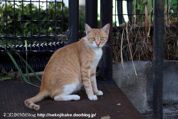 2016081007猫との対話。3