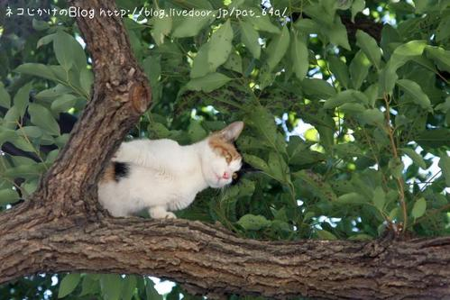 木登り。その3 三毛