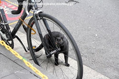 自転車に擬態。