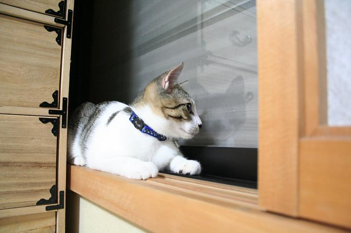 ネコは自由だ。シマ