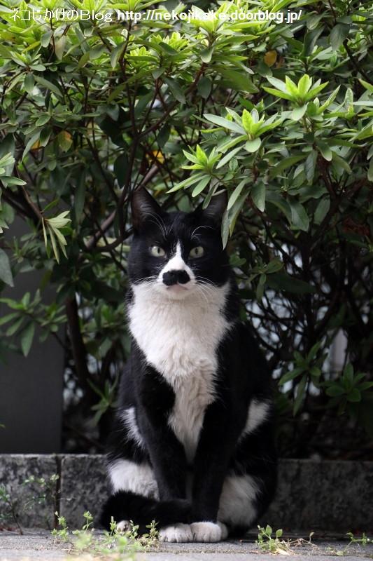 2017040606猫がこっち見てる。4