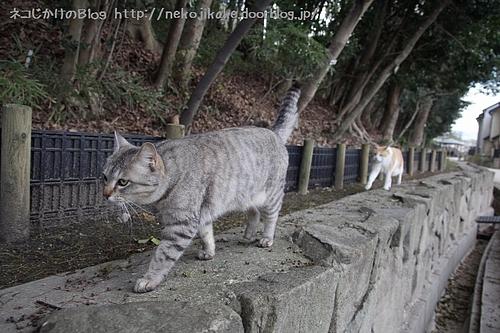 ネコたちの行進。