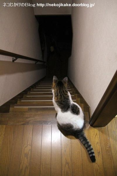 2014110201階段に猫がおんねん。