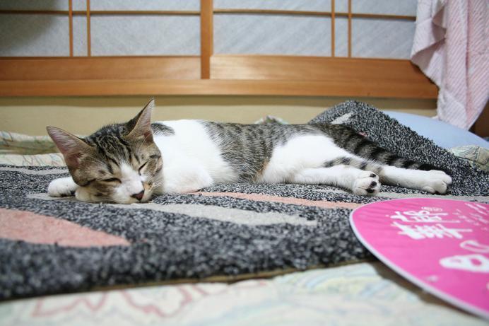 寝たいときに寝る。シマ