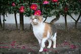 ネコのいる風景。その1