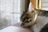 寝るねるネル。シマ