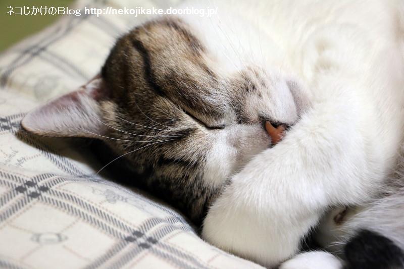 2017100702寝ている猫の観察。
