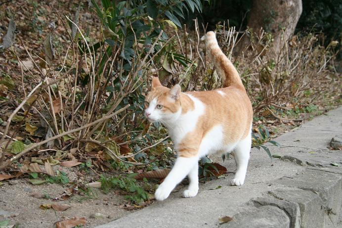 ネコさんネコさん、どこ行くの?