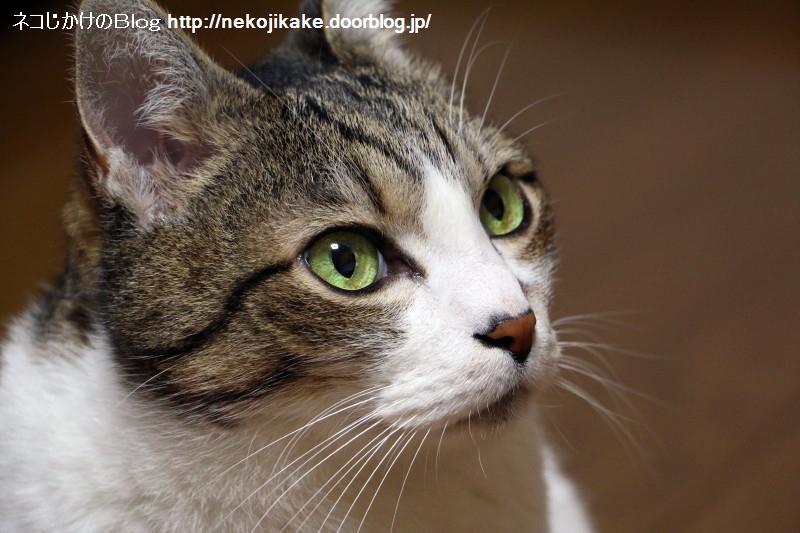 2017041606猫の瞳は美しい。