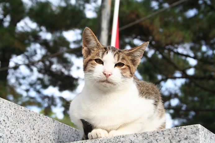 今日もいいネコ。神社