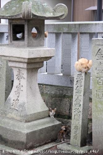 3匹の子ネコ。 茶トラ白母さん、茶トラ1、ミケ2