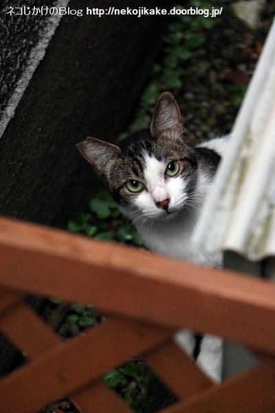 2016091301外の猫、うちの猫。1