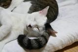 枕。クロシマ