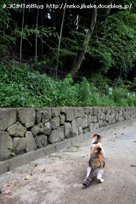 石垣の向こうにはなにがあるのだろうか。