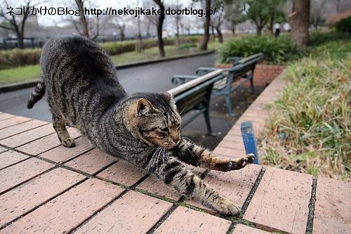 猫背矯正。