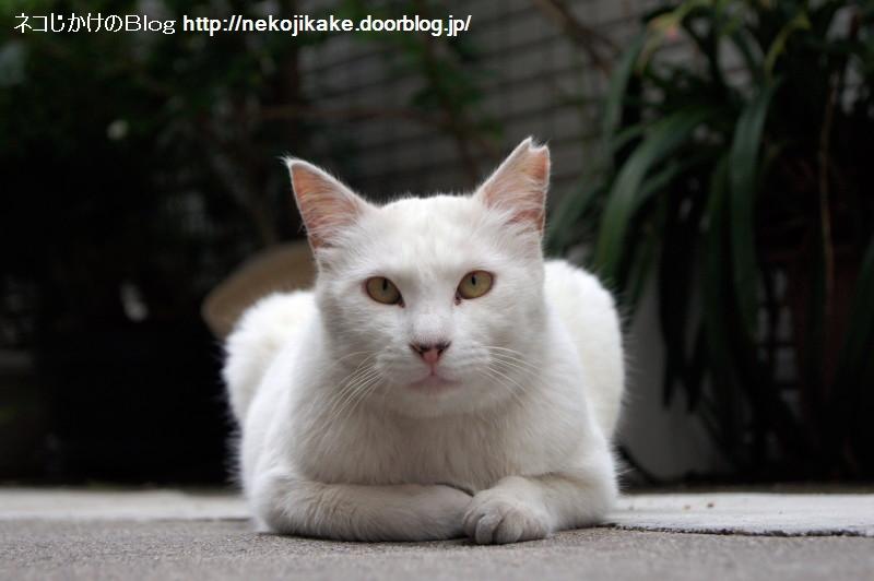 2016061506白猫との対話。