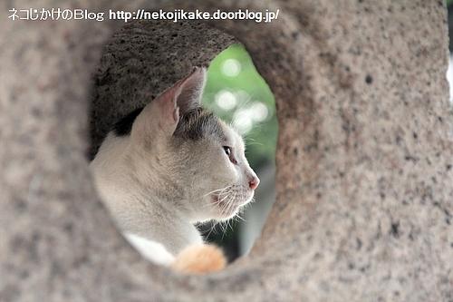 ミケちゃんの横顔。