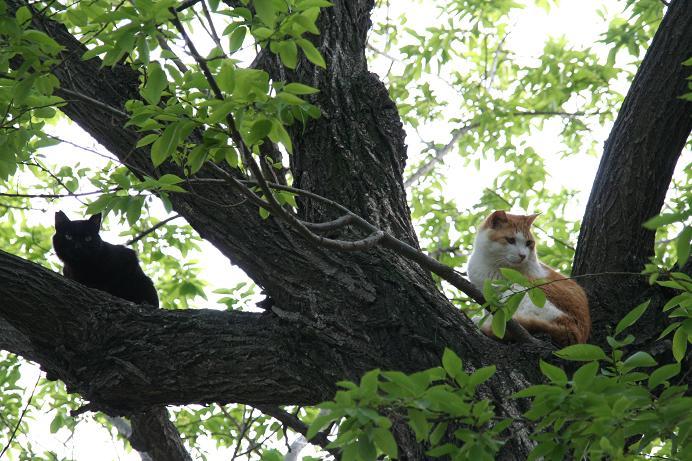 少しでも空に近づきたくて。外のネコの場合。