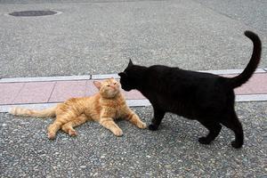 ネコ触り放題。その4