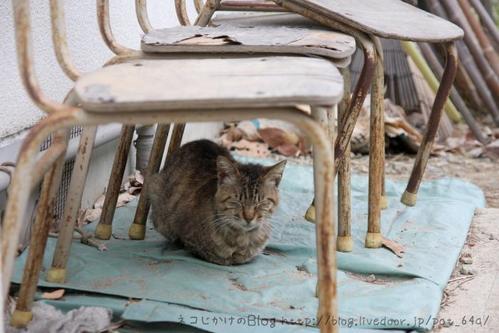 椅子か屋根か。 キジトラ