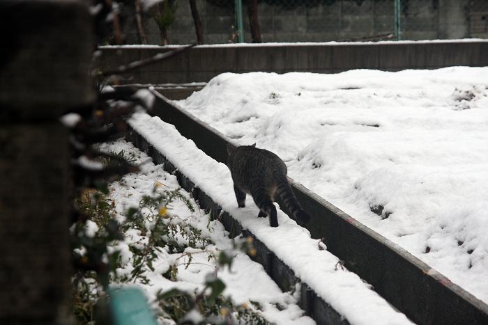 雪の日。その3