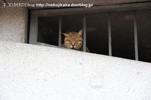 囚われの・・・。