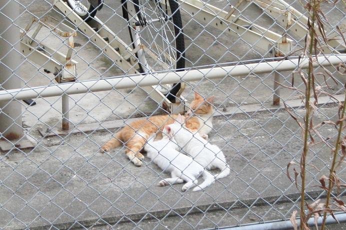 ノラネコと仲良しになりたい。親子ネコ