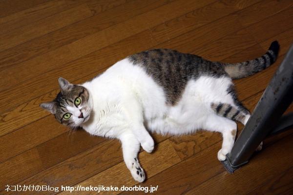 2017010606猫は内。1