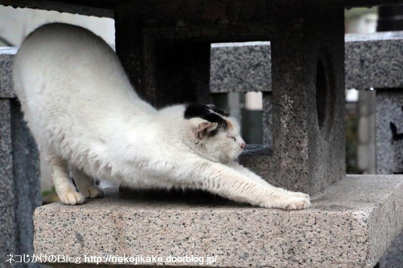 2015041008雨中猫あり。7