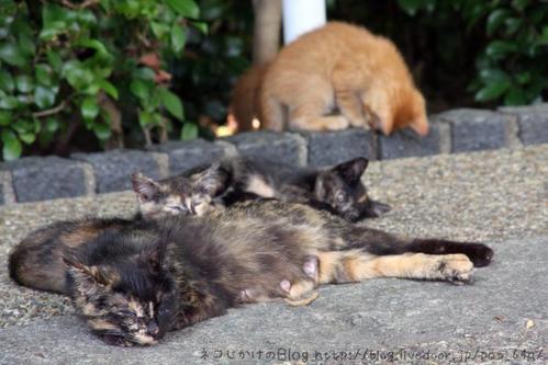 子ネコがたくさん。サビ母さん サビ子ネコ2匹 茶トラ子ネコ2匹