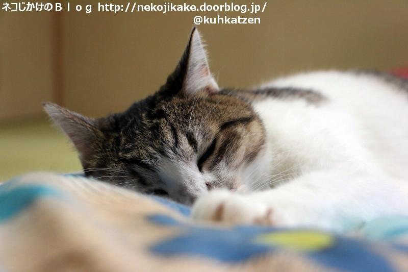 2020071003幸せな睡眠。1
