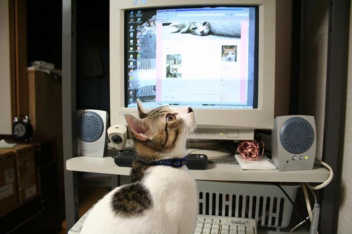 じっとネコを見る。シマ