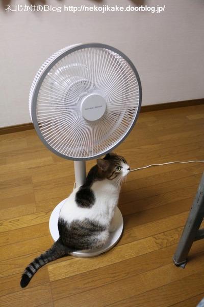 2016091903扇風機が首を振る。2