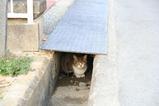 はじめてのネコたち。その1