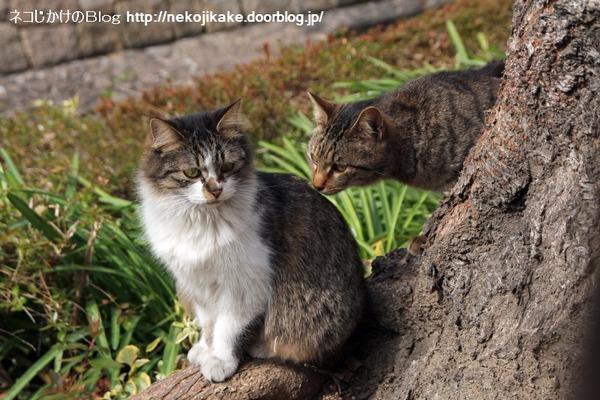 2014022602猫ソムリエ。