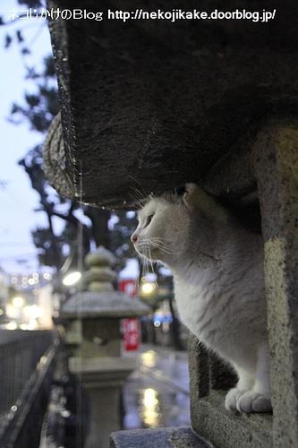 雨宿りの猫。