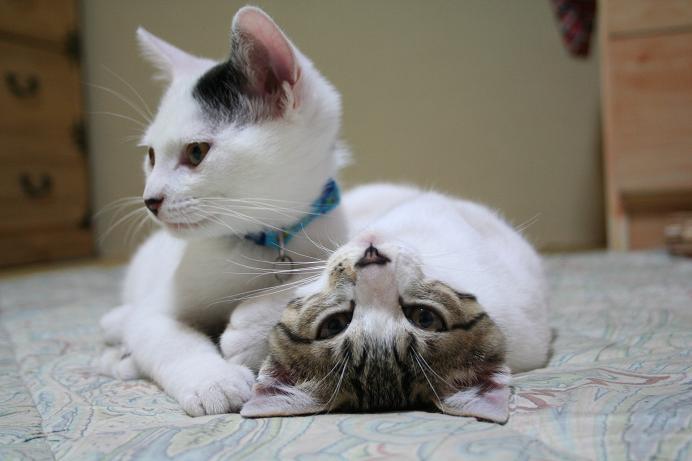 くつろぎネコさんたち。クロシマ。