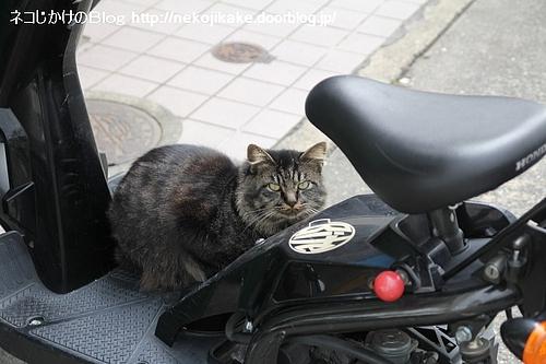 バイクの乗り心地を試してやろう。