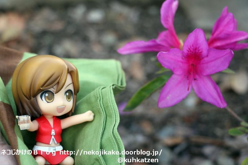2020041402花は咲く。1
