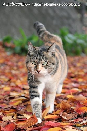 落ち葉を踏みしめて。